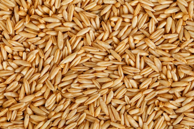 Grains d'avoine naturels, gros plan. grain d'or.
