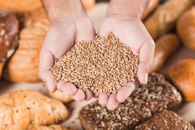 Grains de blé à la main sur le pain frais cuit