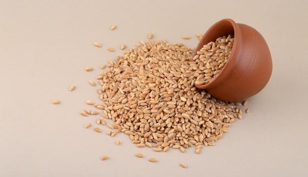 Grains de blé en pot d'argile sur fond crème. fermer.