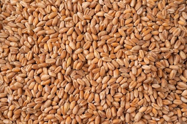Grains de blé en vue rapprochée image parfaite de la texture de l'agriculture, vue de dessus macro close up