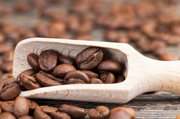 Grains de café aromatiques gros plan