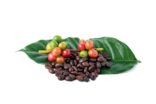 Grains de café et café mûr isolé sur fond blanc.