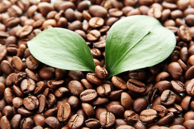 Grains de café avec des feuilles