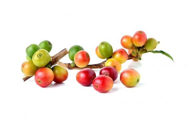 Grains de café frais isolés