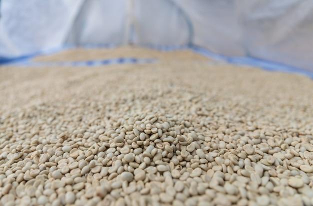 Grains de café frais séchés sur un plateau avec couvercle en feuille de plastique à sec par la lumière du soleil