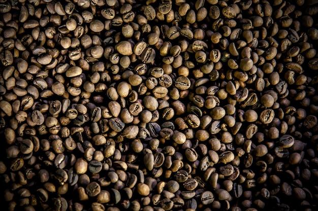 Grains de café luwak. vue de dessus. le café légendaire de bali, indonésie