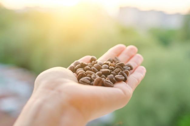 Grains de café à la main, fond de ciel coucher de soleil du soir