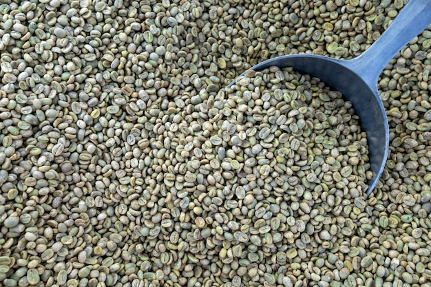 Les grains de café n'ont pas été torréfiés. vue de dessus