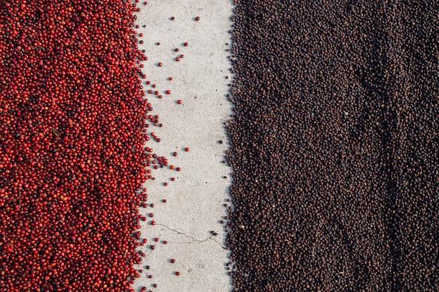 Grains de café séchant au soleil. plantations de café à la ferme de café