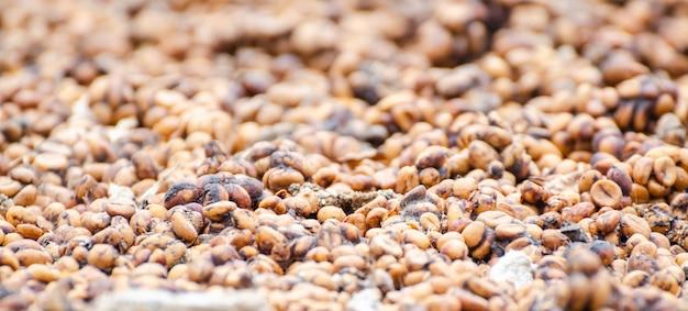 Grains de café séchés au soleil avant le rôti