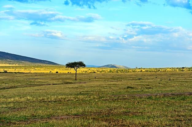Grand acacia dans les plaines de savane ouvertes de l'afrique de l'est