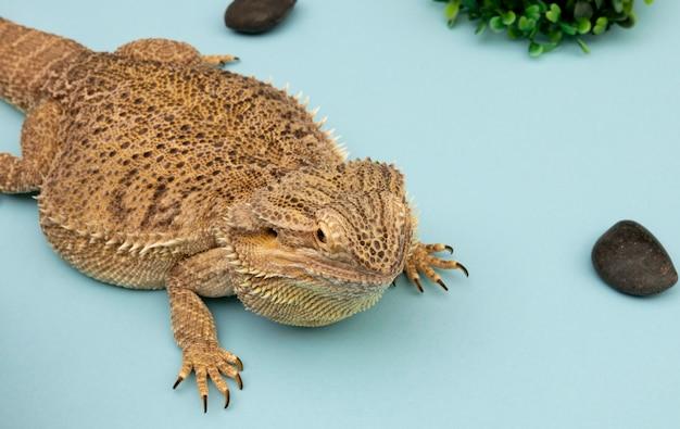 Grand angle de reptile iguane