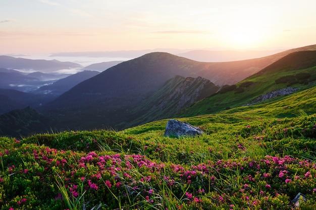 Grand angle de vue. majestueuses montagnes des carpates. beau paysage.