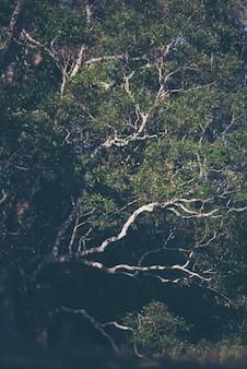 Un grand arbre dans la forêt tropicale