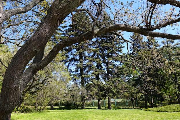 Grand arbre dans le jardin botanique