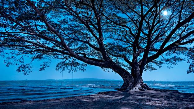 Grand arbre la nuit