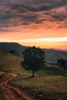 Grand arbre avec des oiseaux qui volent sur une colline dans la campagne au lever du soleil