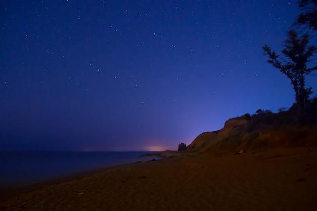 Grand arbre sur une plage sous un ciel bleu foncé avec de nombreuses étoiles brillantes.