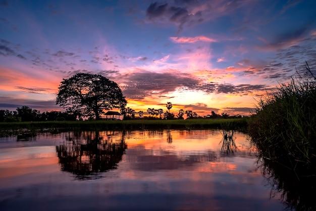 Grand arbre et reflets dans le fond de lever de soleil de l'eau.