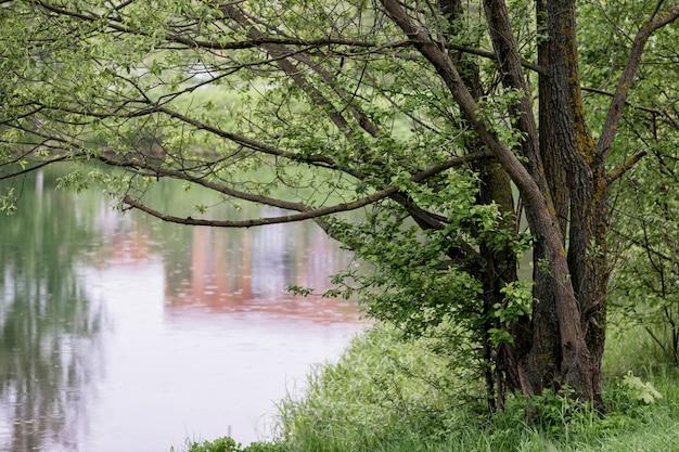 Grand arbre sur la rive du lac étalé ses branches sur l'eau un jour de pluie