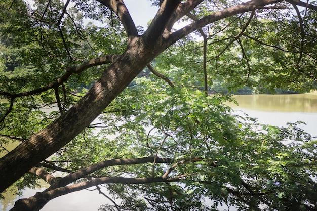 Grand arbre vert dans un étang de jardin