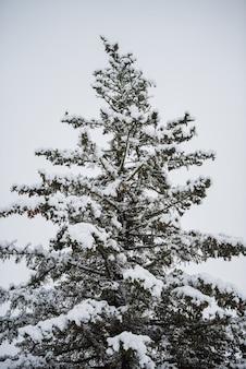 Grand bel arbre de noël avec de la neige en forêt