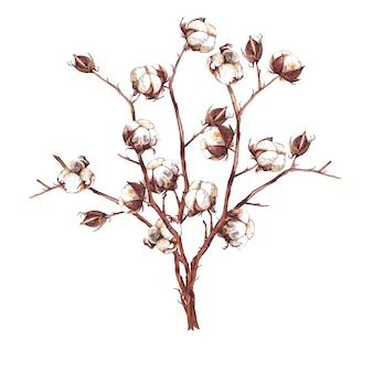 Grand bouquet de branches de coton avec des boîtes et des bourgeons. peinture à l'aquarelle.