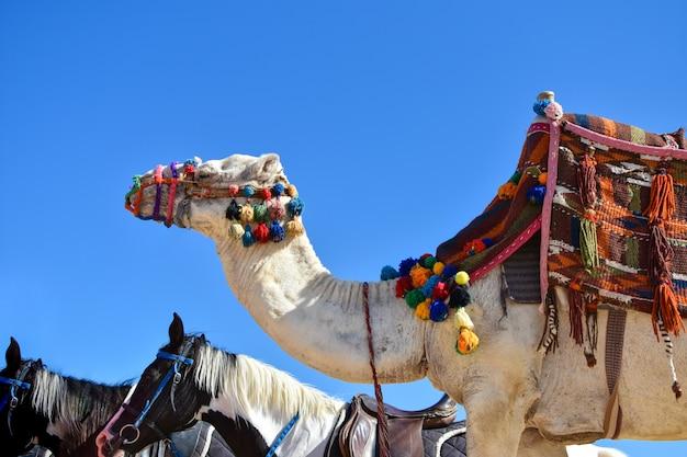 Un grand chameau dans une tenue colorée et un cheval marchent le long du sable contre le ciel bleu