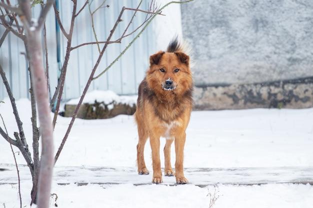 Grand chien brun dans la cour près d'un arbre en hiver