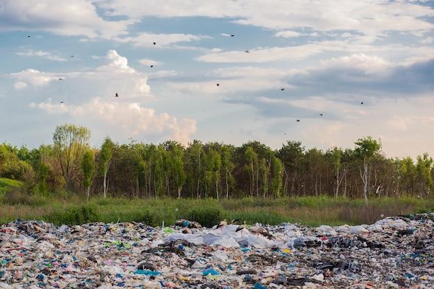 Grand dépotoir sur fond de forêt, la décharge pollue l'environnement