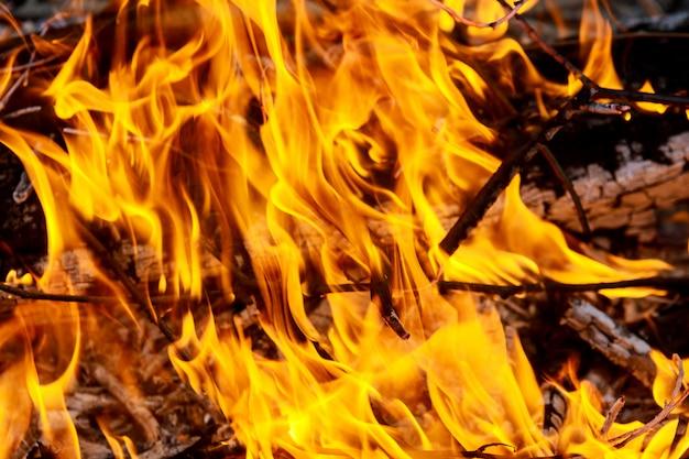 Grand feu brûlant des branches d'olivier après la taille