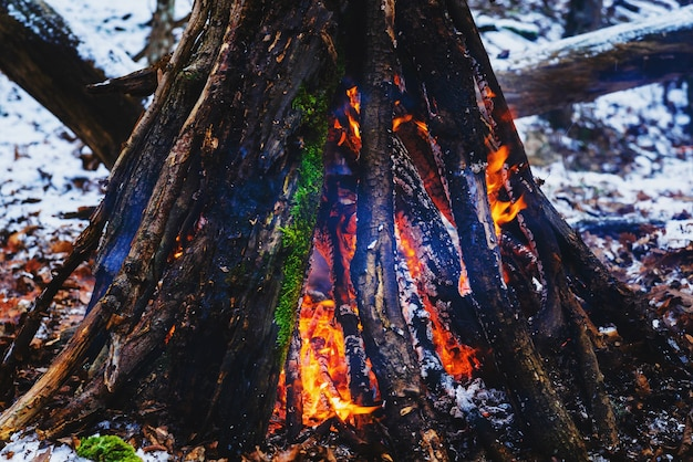 Grand feu de joie dans la forêt d'hiver pendant la journée