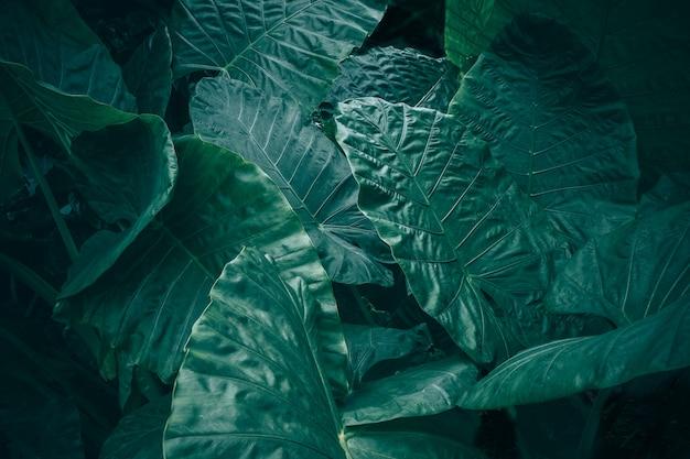 Grand feuillage de feuilles tropicales à texture vert foncé