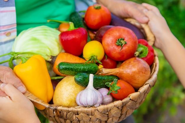 Grand-mère dans le jardin avec un enfant et une récolte de légumes. mise au point sélective. nourriture.