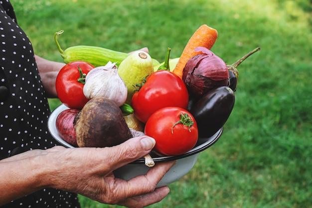 Grand-mère dans le jardin avec des légumes dans les mains. mise au point sélective. la nature.