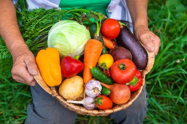 Grand-mère dans le jardin avec une récolte de légumes. mise au point sélective.