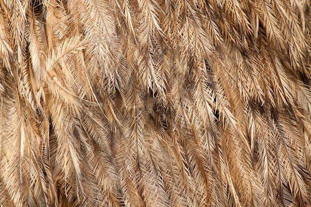 Grand motif de plumes de rhea americana
