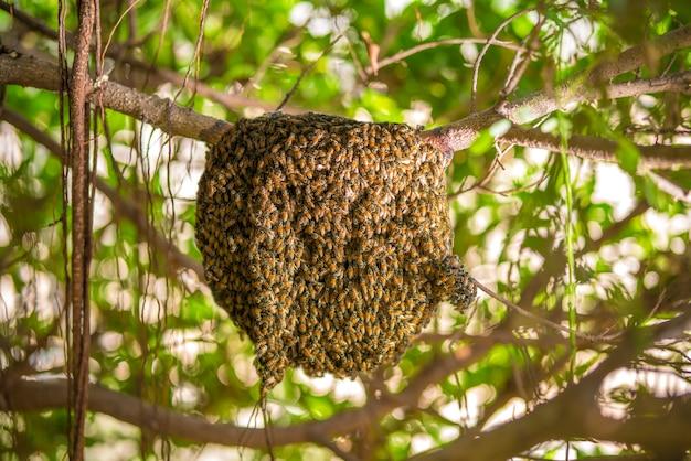 Grand nid d'abeille sur l'arbre dans la forêt tropicale humide.
