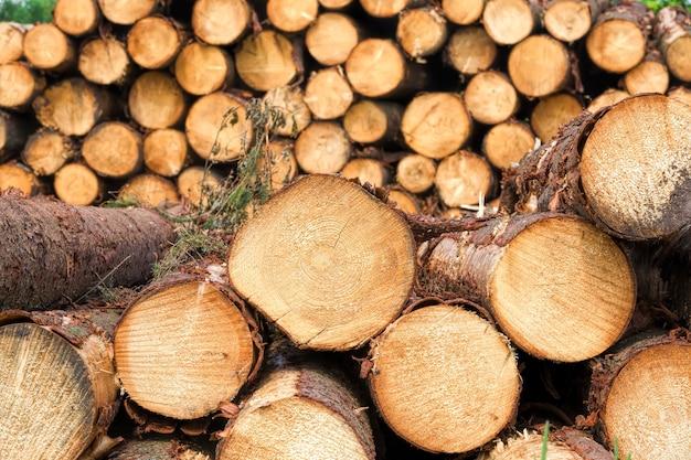 Un grand nombre de bois résineux récoltés, empilés en tas, site industriel