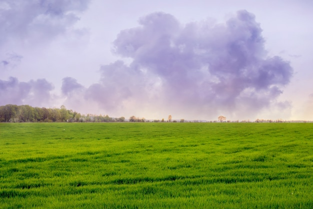 Grand nuage bouclé sur un champ avec de l'herbe verte