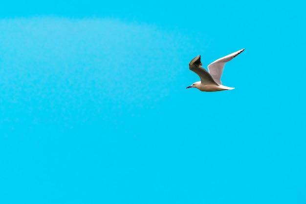 Grand oiseau mouette en vol