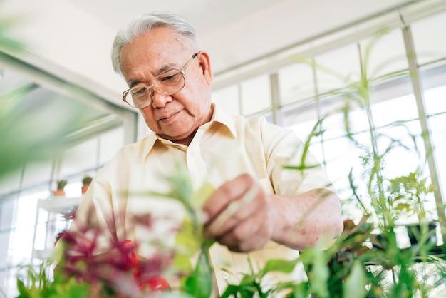 Grand-père s'occupe des plantes dans un jardin intérieur de la maison