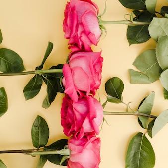 Grand plan, de, beau, arrangé, roses