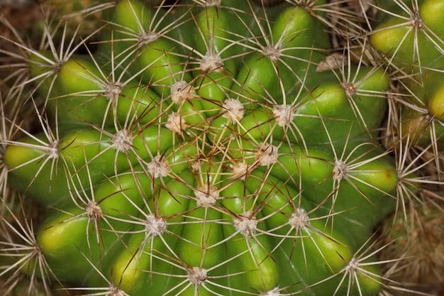 Grand plan, cactus, dans, jardin