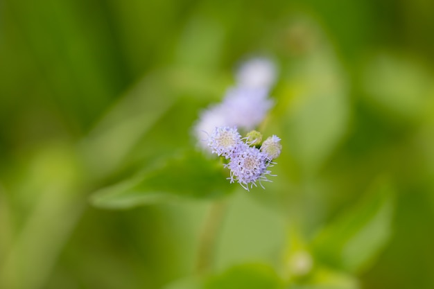 Grand plan, de, pré, blanc, fleurs, dans, champ, ou, herbe, fleur