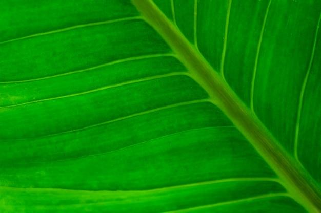 Grand plan, de, vert, grande feuille