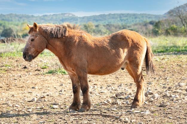 Grand poney debout dans un champ