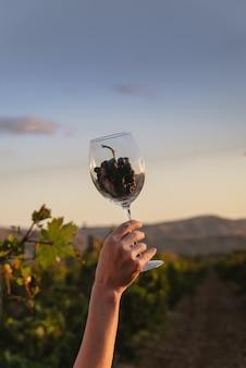 Grand verre à vin avec une grappe de raisin dans une main féminine sur fond de vignoble au coucher du soleil