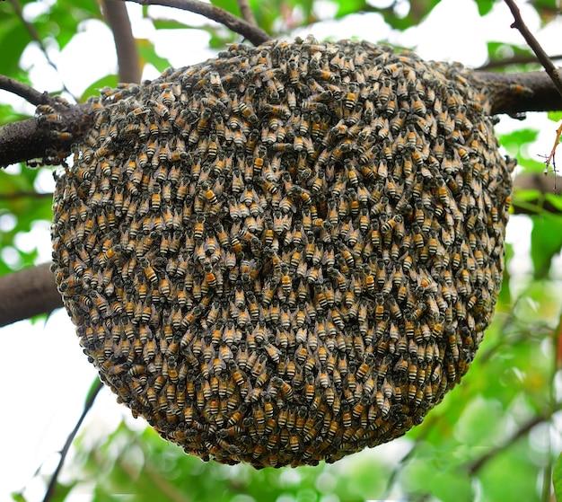 Grande abeille essaim sur arbre