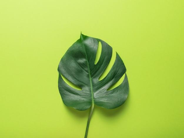 Une grande et belle feuille verte sur fond vert. conception minimaliste.